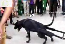 Amazing The Power Of Dog