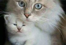 mooie katten