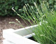 Blumenkasten / Terrasse Abgrenzung