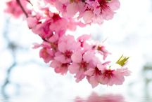 amaze flower photo