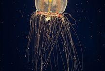 JELLYFISH / Oceanic design