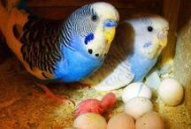 Ptichkiptichky