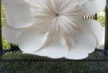 parírvirágok
