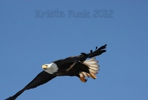 EAGLES / by Laura Hunt