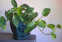 Beneficial Indoor Plants