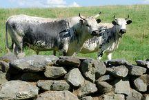 Animals on Newhall Farm