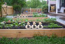 Gardening / by Jenna Baric