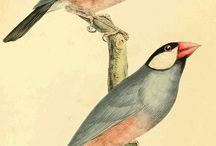 Vintage birds and animal posters