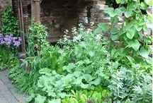 gardening & lanscaping