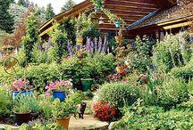 Home: Garden / gardening
