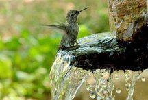 Hummingbirds / Kolibri