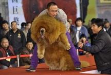 OMG! Dog grooms / by Karna Huehns