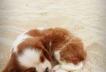 cute / schattige fotos