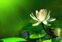 Digital Flowers / Digital Paintings created with Corel Painter 11.