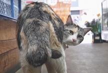 Public cat