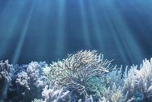 Oceans llum i colo