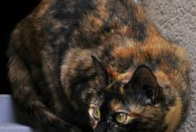 Tortie cats