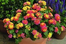Summer Gardening / The hot days of summer deserve extra attention in your garden. Spicy hot colors look great in full sun and luscious vegetables are peaking in freshness. Enjoy!