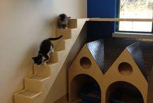 kitties furniture