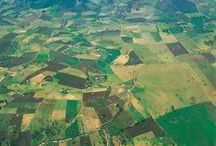 Cultivos / Crops
