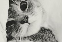 Cat love ♡