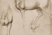 Cavalos de Da Vinvi