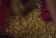Got a hamster
