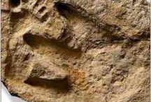 Foot print human and dinosaur.