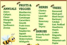 TO BEE OR NOT TO BEE... / Gardening-deas Of helping nature and in particular bees,