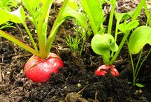 Community, Gardens / Community, Gardens, and Community Gardens.  Gardening inspiration and ideas. / by Community NHS