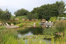 Ellicar Gardens / naturalistic, wildlife friendly family gardens with natural swimming pool and rare breed pets