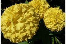 Kvety-vybrané