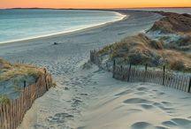 {Beach Life}