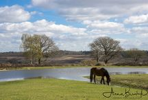 Landscapes / Some beautiful landscapes I have photographed