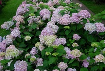 Front Yard Landscaping / by Mandy Myers