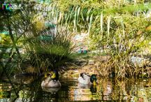 Jardín de la Seda / Un paseo por el jardín de la Seda de #murcia.   Toma este nombre por una antigua fábrica de seda que había en el actual solar del jardín, donde todavía se conserva la chimenea.   Un lugar especial, muy céntrico de Murcia.