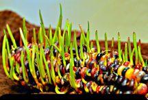 Planting/Growing