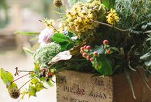 Flores silvestres ☆ / Flores y naturaleza silvestre