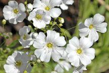 Trädgård- sommarblommor rabatt 2018