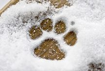 Chilling in winter / Some information to help out our pets during these cold winter months.