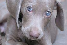 Киски собакеи и другие