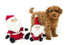 It's a FuzzYard kind of Christmas / Help your four legged family member get in the Christmas spirit this festive season!