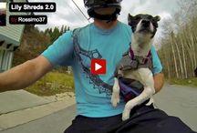 Amazing Pups / Amazing Pups Around The World