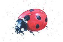 Ladybugs and ladybirds