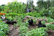 Odling / Odlingslotter, kolonilotter, stadsodling, allotment gardens, odla, moestuin, volkstuin.
