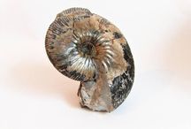 Mineral Specimens and Fossils