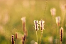 Nature Inspired / nature, countryside, flowers, sunflare,dreams