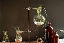 Rośliny w przestrzeni