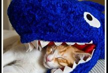 Cat Shark Week / by Manhattan Cat Specialists