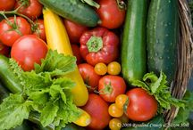 veg garden / by Kari Ann Ramsey